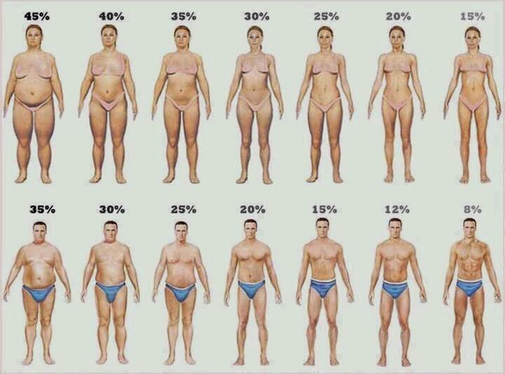 Ανάλυση σύστασης σώματος 5