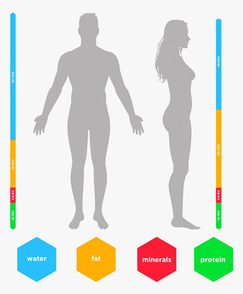 Ανάλυση σύστασης σώματος 1